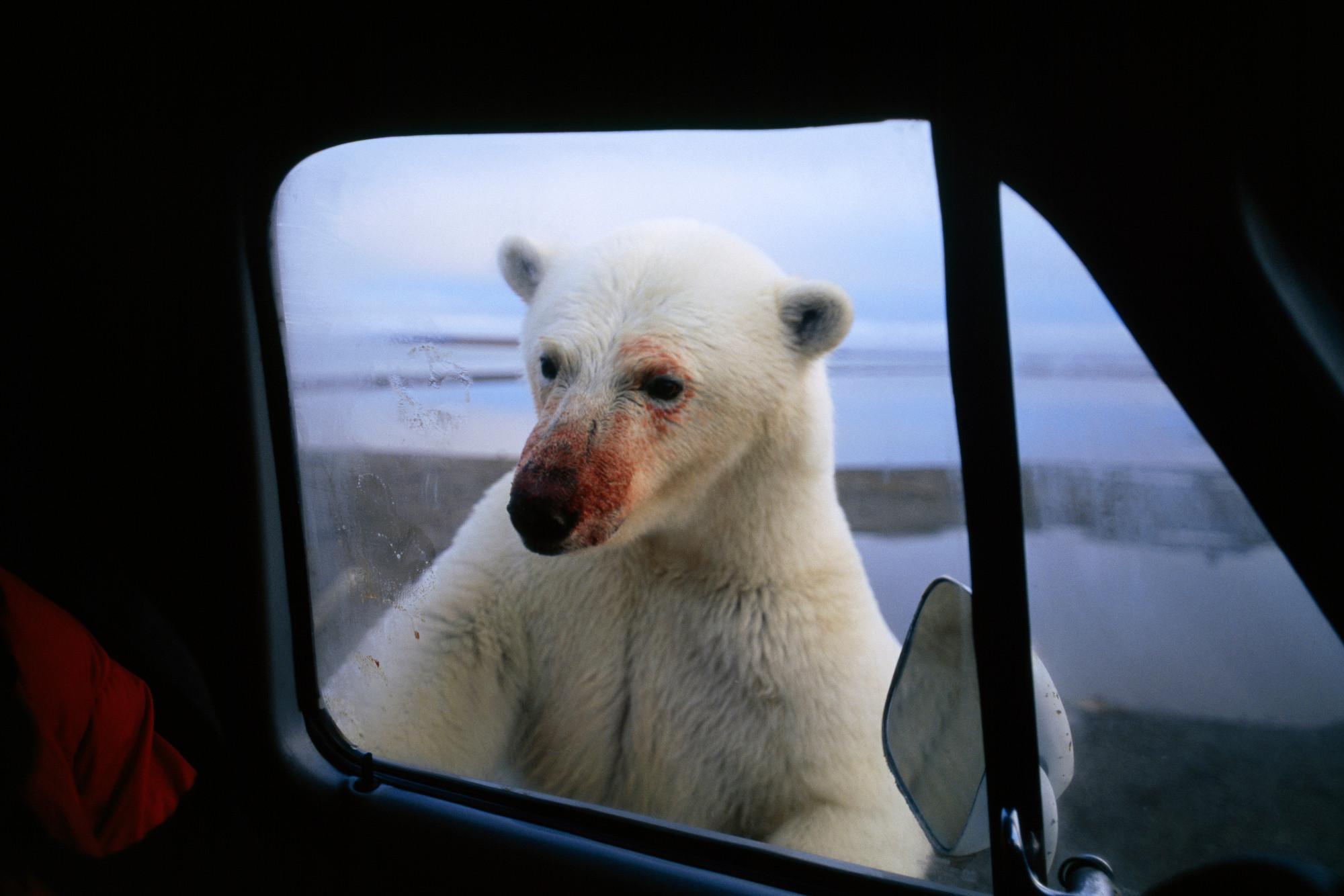 магазины каких фото белый медведь фургон окно чернокожие