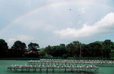 Photo: Egrets on breeding and nesting platforms at Jungle Gardens on Avery Island.