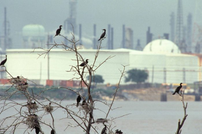 Photo: Cormorants nest mid oil refineries in Houston, Texas.