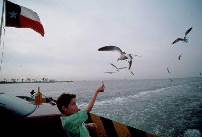 Photo: Laughing gulls in Galveston Bay.