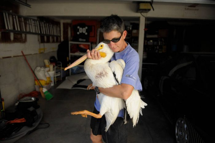 A woman carrying a white pelican (Pelecanus erythrorhynchos) through her garage.