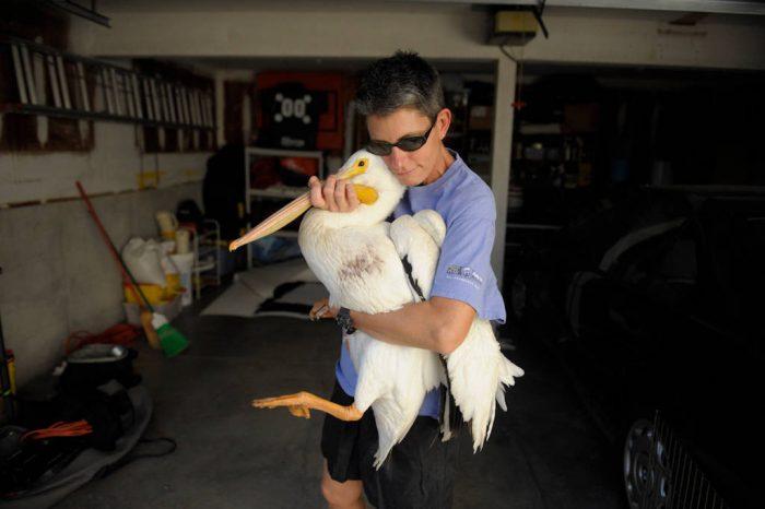 A woman carrying a white pelican (Pelecanus erythrorhynchos) through her garage.