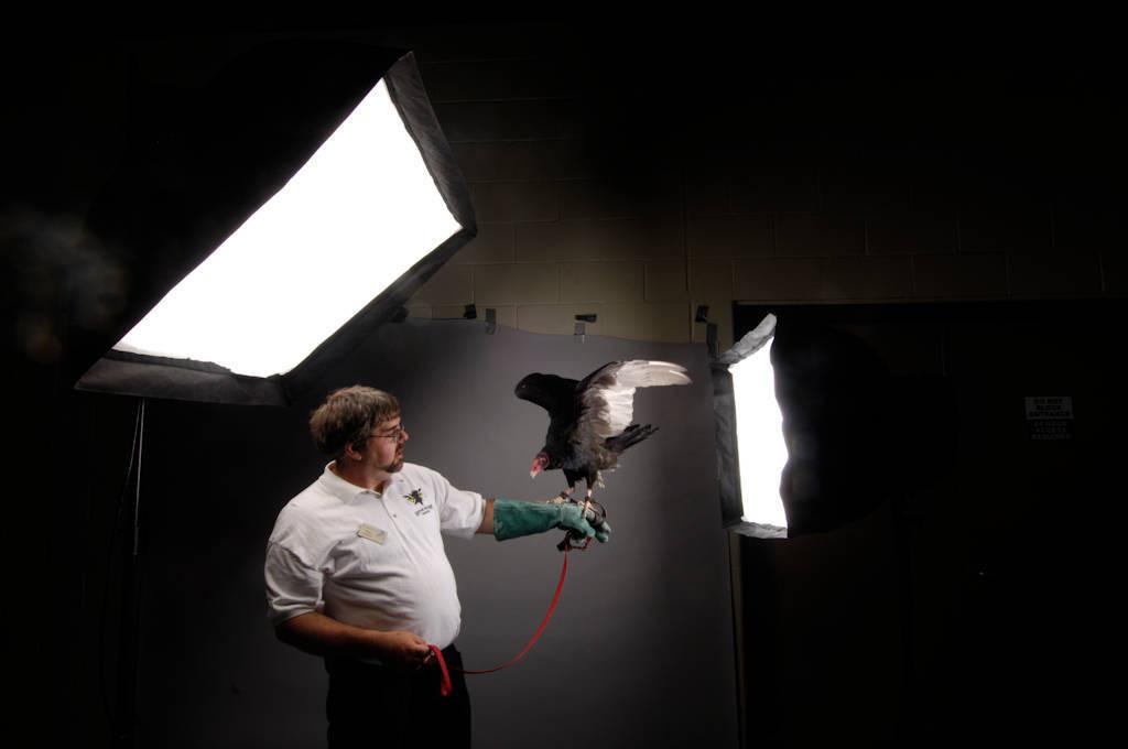 Photo: A portrait of a turkey vulture (Cathartes aura).