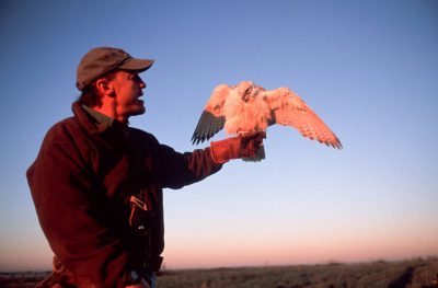 Photo: A falconer with his gyrfalcon, one of the fastest animals on earth.