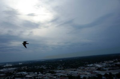 Photo: A peregrine falcon flies over Lincoln.