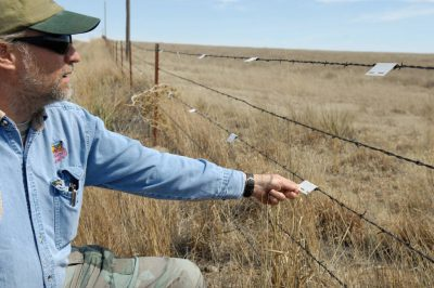 Photo: One of the last gobbling grounds of the lesser prairie chicken in Laverne, Oklahoma.