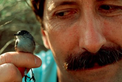 Photo: An endangered California gnatcatcher perched on a biologist's finger in Orange County, CA.