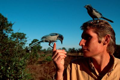 Photo: Volunteer Jon Thaxton with a Florida scrub-jay (threatened) at the Mary Thaxton preserve in Oscar Scherer State Park near Osprey, FL.