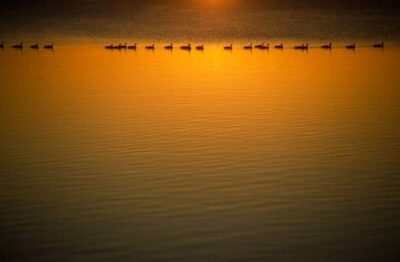 Photo: Ducks silhouetted against a lake.