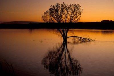 Photo: Birds silhouetted on a tree at Bosque del Apache NWR in NewMexico.