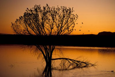 Photo: Birds silhouetted on a tree at Bosque del Apache National Wildlife Refuge in New Mexico.