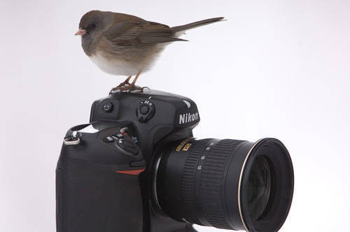 Photo: A bird perched on a Nikon D2X camera ata farm near Bennett, Nebraska.