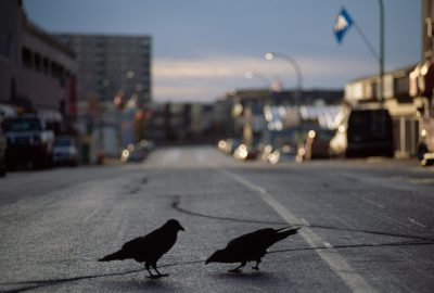 Photo: Birds search for food in an urban environment.