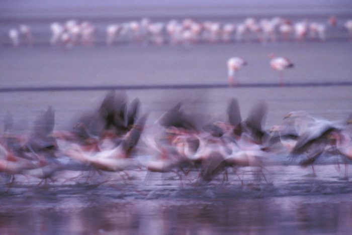Photo: Flamingos at Laguna Colorada, Bolivia.
