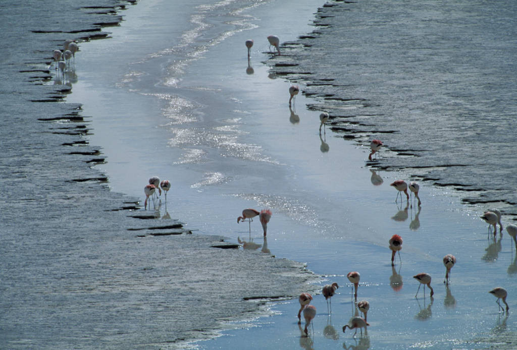Photo: Flamingos at Laguna Colorada, Bolivia.