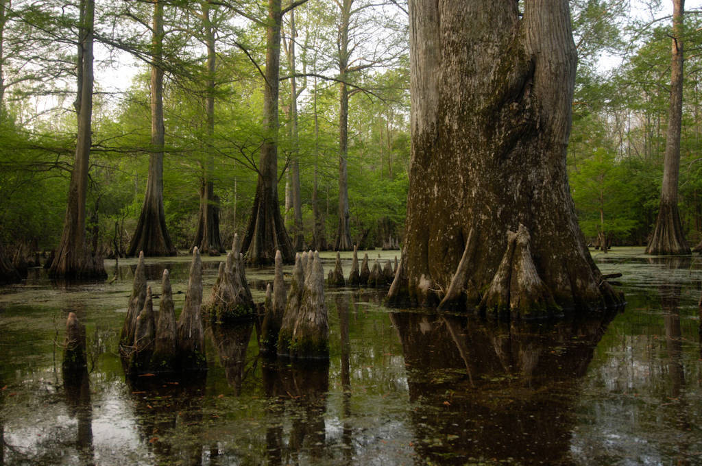 Photo: A view at Bayou De View in the Cache River National Wildlife Refuge, Arkansas.
