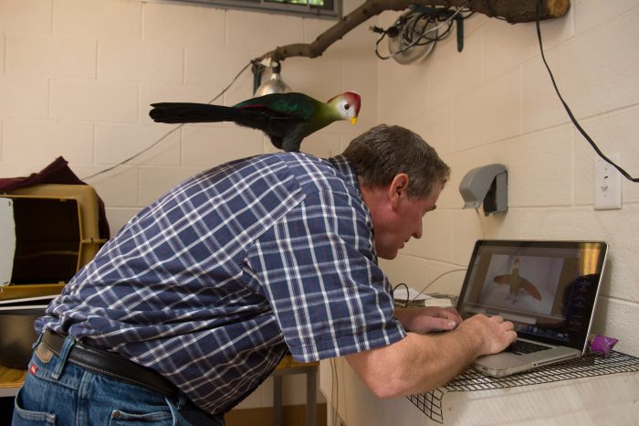 Joel Sartore edits pictures with the help of Kambo, a red-crested turaco (Tauraco erythrolophus), at Tracy Aviary.