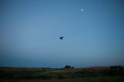 Photo: A swallow near Denton, NE.