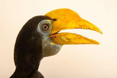 animal head images - Joel Sartore