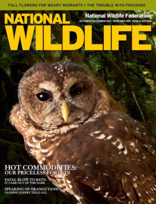 Photo: Joel Sartore's photograph of a northern spotted owl was featured on the cover of the October - November 2011 issue of National Wildlife Magazine.