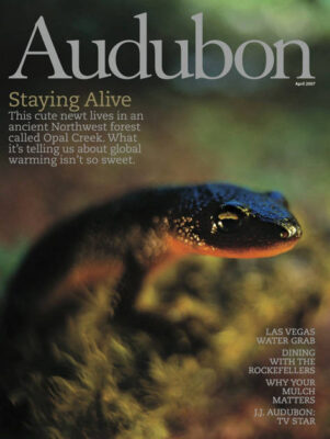 Photo: Joel Sartore's photograph of a rough-skinned newt, featured on the cover of the April, 2007 issue of Audubon Magazine.