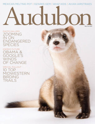 Photo: Joel Sartore's photo of a black-footed ferret is featured on the cover of the May - June 2009 issue of Audubon magazine.
