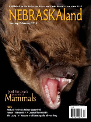 Photo: Joel Sartore's photo of a bat is featured on the cover of the January-February 2011 issue of NEBRASKAland magazine.