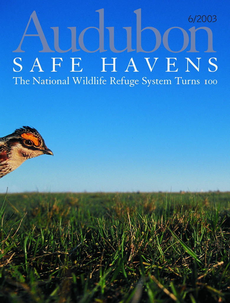 Photo: Joel Sartore's photograph of an Attwater's prairie-chicken is featured on the cover of the June, 2003 issue of Audubon magazine.