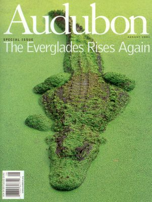 Photo: Joel Sartore's photo of an alligator is featured on the cover of the August, 2001 issue of Audubon magazine.
