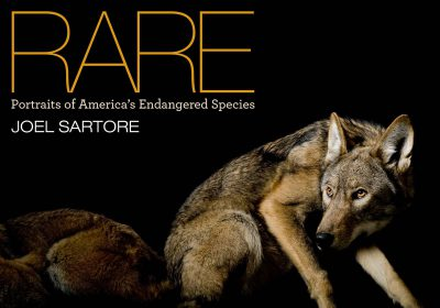 Photo: The cover of RARE: Portraits of America's Endangered Species, by Joel Sartore.