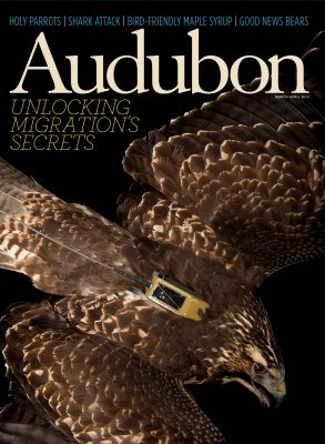 Joel Sartore's portrait of a Swainson's hawk (Buteo swainsoni) on the cover of the March-April 2012 issue of Audubon magazine.