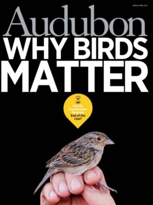 Joel Sartore's portrait of a federally endangered Florida grasshopper sparrow (Ammodramus savannarum floridanus) on the cover of the March-April 2013 issue of Audubon magazine.