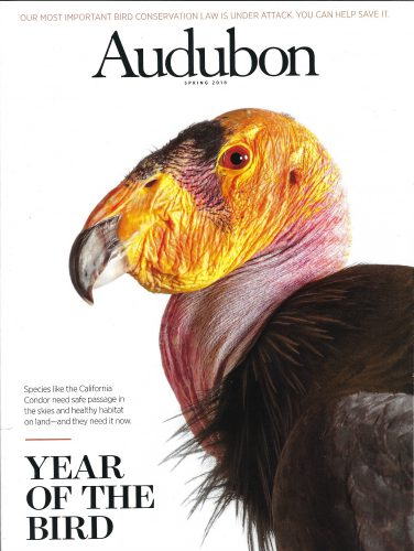 Photo: Joel Sartore's portrait of a California condor (Gymnogyps californianus) on the cover of the Spring 2018 issue of Audubon magazine.