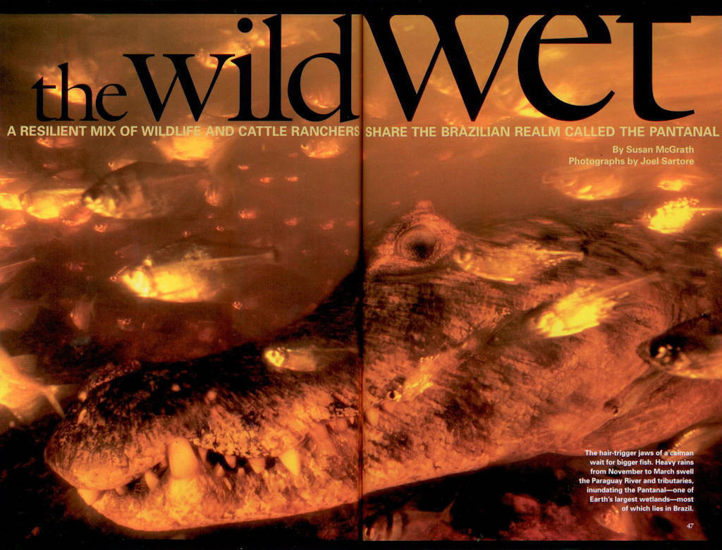 "Photo: The opening spread of the article ""The Wild Wet"" about Brazilian Pantanal, in the August, 2005 issue of National Geographic magazine, featuring Joel Sartore's photos."