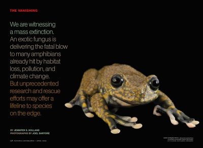 "Photo: The opening spread of ""The Vanishing,"" an article about amphibian extinction, from the April, 2009 issue of National Geographic magazine, featuring Joel Sartore's photo of a Suro stream frog."