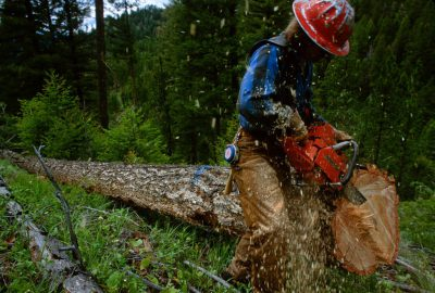 Photo: Logging near Salmon, Idaho.