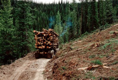 Photo: Logging on the Olympic Peninsula.