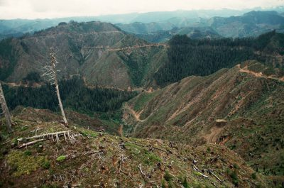 Photo: Clear-cutting in the Olympic National Forest, Washington.