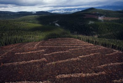 Photo: Logging in the Salmon National Forest, Idaho.