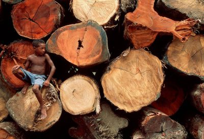 Photo: Old growth forest logs stacked and waiting for sale along the Capim River, a tributary of the Brazilian Amazon.