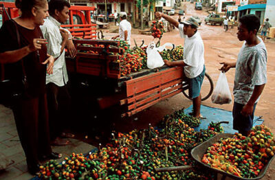 Photo: Multi-colored pupunha, a forest fruit, being sold at the market in Paragominas, Brazil.