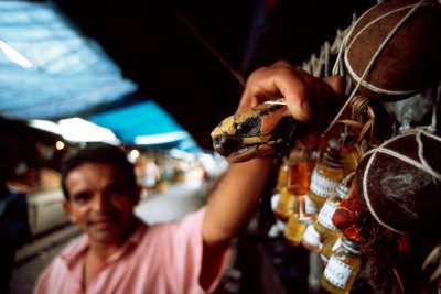 Photo: A vendor shows off a turtle head, part of the medicine he'sselling in his booth at the Ver-O-Peso market in Belem, Brazil.