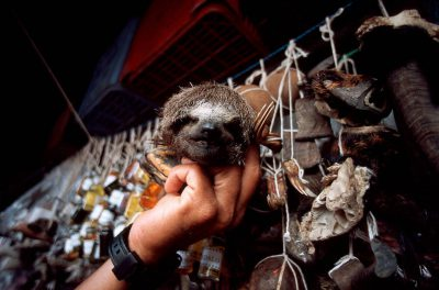 Photo: A vendor shows off a sloth head, part of the medicine he's selling in his booth at the Ver-O-Peso market in Belem, Brazil.