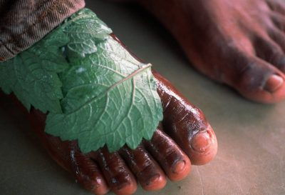 Photo: A medicinal plant from the rain forest is used to heal an infected foot at a workshop in Quiandeua, a small village in the Brazilian Amazon.