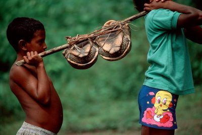 Photo: Daily life along the Capim River in the village Quiandeua: children transport tortoises taken for food.