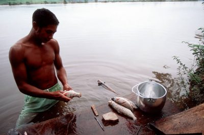 Photo: Daily life along the Capim River in the village of Quiandeua: a man cleans tiny fish for his family's supper.