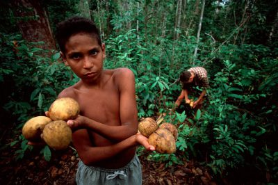 Photo: Bacuri fruit lies on the forest floor in the Brazilian Amazon.