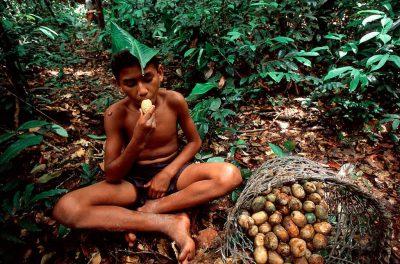 Photo: Uxi fruit gathering in the Brazilian Amazon.