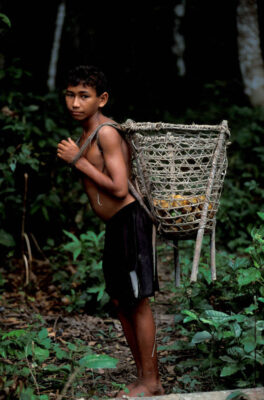 Photo: A boy uses a basket to carry Uxi fruit gathered in the Brazilian Amazon.