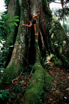 Photo: A boy scales a huge tree on an island near the city of Belem, Brazil, in the Brazilian Amazon.